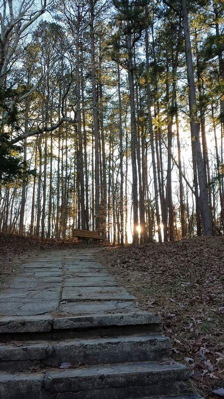 The afternoon sun shines through the pines at the steps leading to the observation area at Garden of the Gods in Saline County, one of the few areas in the Shawnee National Forest currently open.